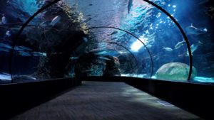 Acrylic aquarium tunnel