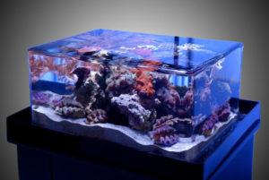 Rimless aquarium display