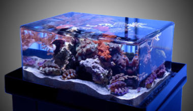 Rimless aquarium display