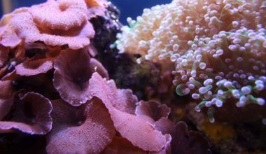 Reef tank thriving due to quality reef salt