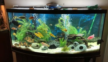 Aquarium filter floss creating very clean water