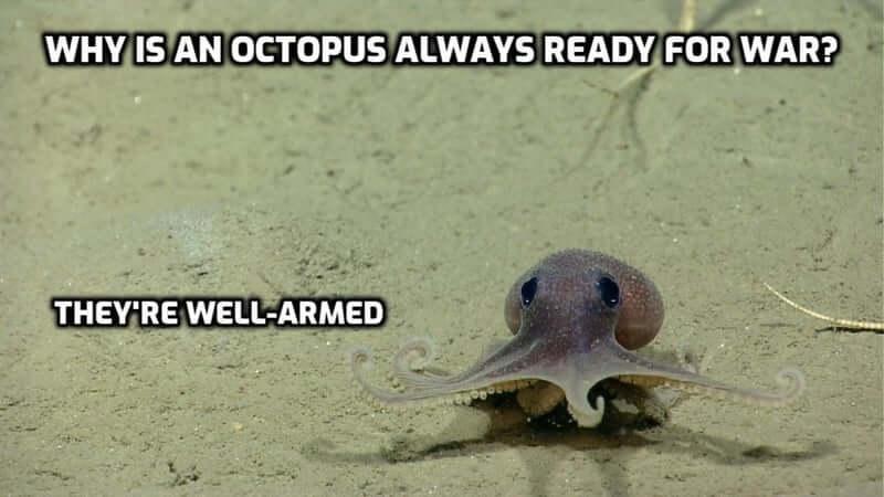 A funny octopus pun