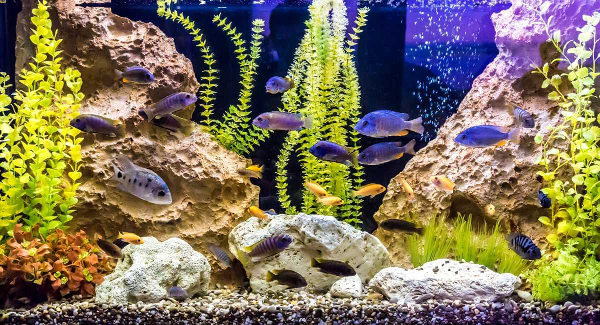 An aquarium with clean water after using the best canister filters