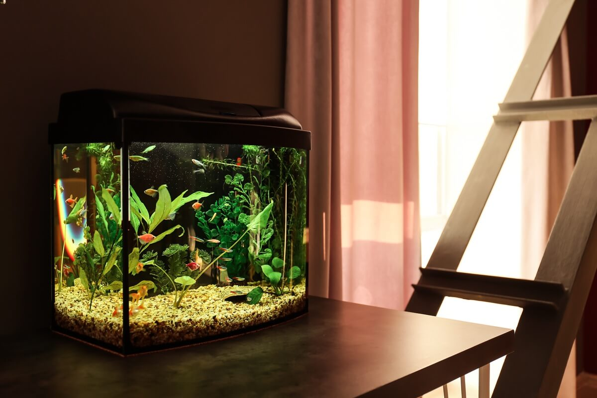 A clean aquarium after being monitored by a test kit